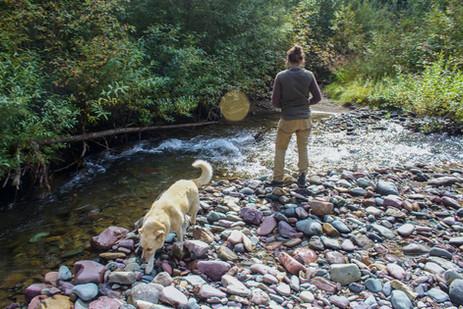 The creek in fall