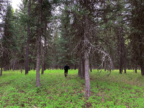 In the forested acres of the property