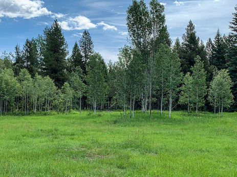 10 acres of forest