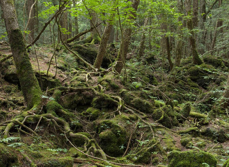 Aokigahara - The Haunted Suicide Forest