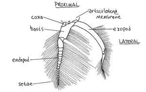 Reference: Ee et.al., 2004