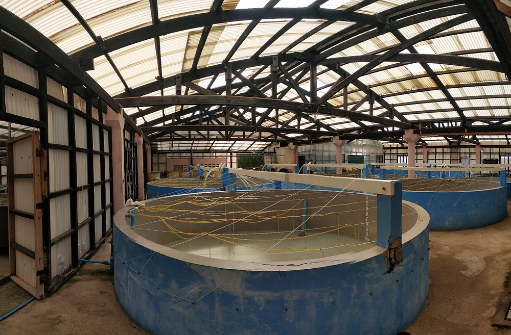 Picture of the mud crab hatchery located in SEAFDEC ILOILO. The facilities has about 10 tanks each at 10000L.