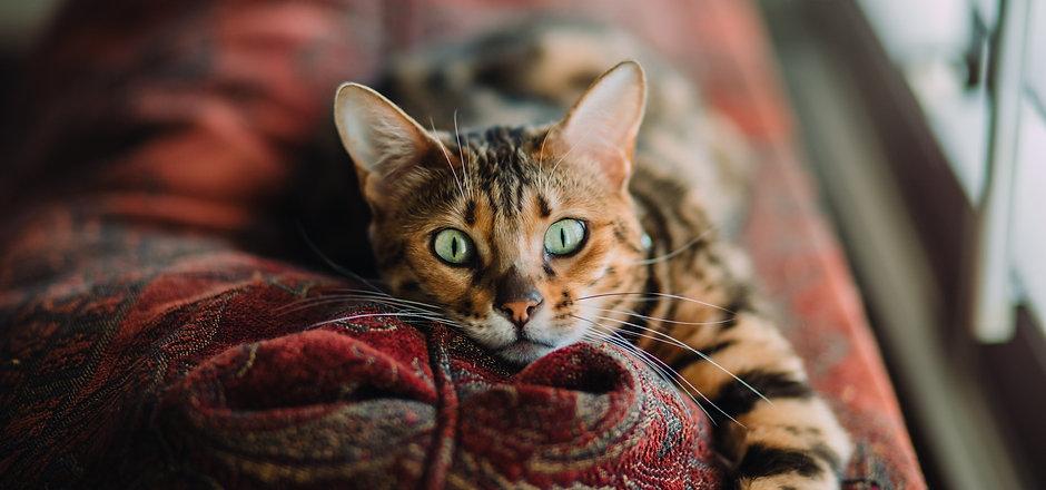 Cat Photo.jpg