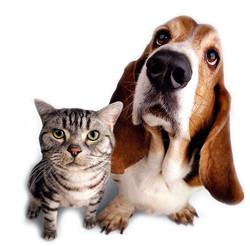 Pet sitting dog and cat