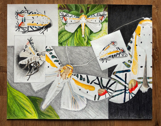 6-Box Insect Study - Graphite & Prismacolor Colored Pencils