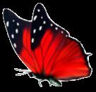 farfallo_rossa.png