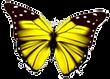 farfallo_gialla.png