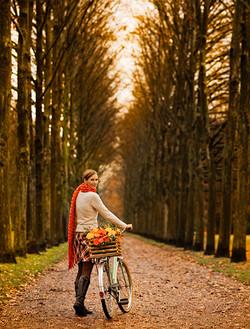 28_bike_trees_new.jpg