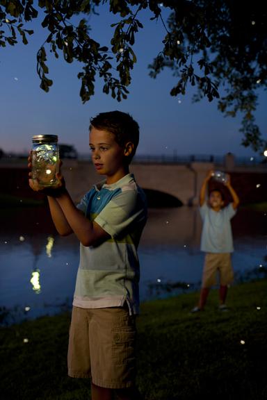 8_fireflies.jpg