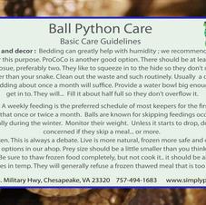 Ball Pythons Side 1