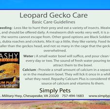 Leopard Gecko Side 1