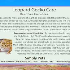 Leopard Gecko SIde 2