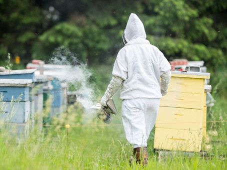 Behind the Scenes: My Apiary