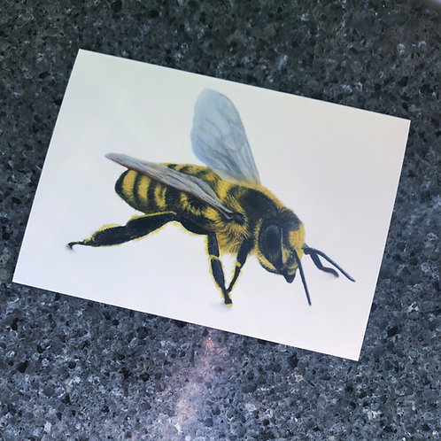 Honey Bee Card/Print