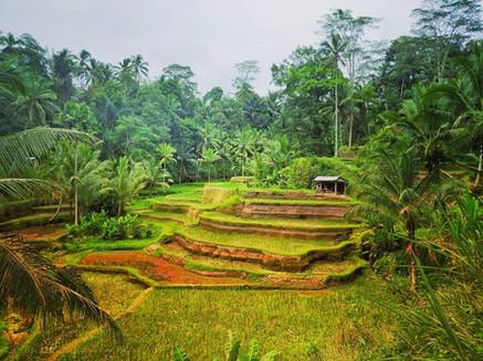 Tegalalang, Bali
