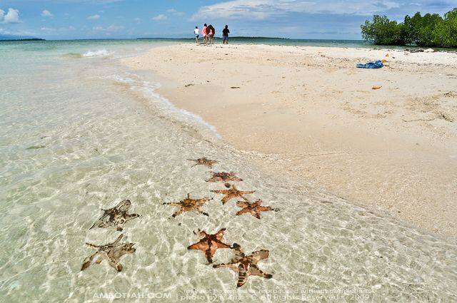HONDA BAY STARFISH ISLAND 2