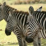 Calauit Safari Busuanga Island tours and