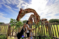 calauit-safari-tour-L