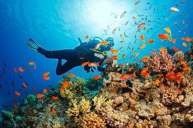 coron palawan fun dives diving.jpg