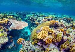 corals 11111