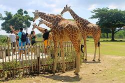 calauit-safari-tour-4-s