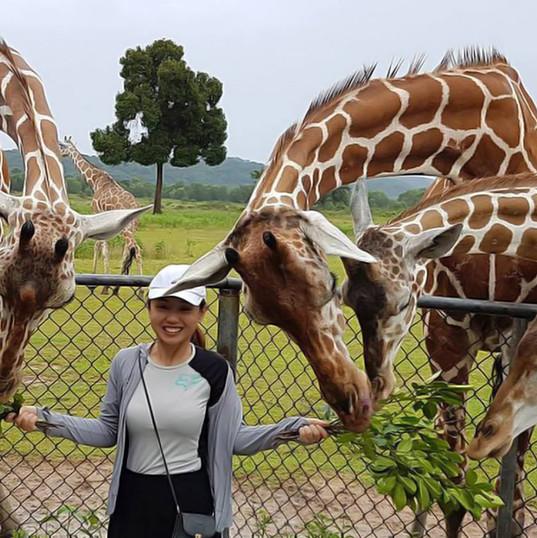Busuanga-Palawan-Calauit-Safari-Tour.jpg