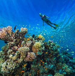 snorkeling Coron island tour palawan.jpg