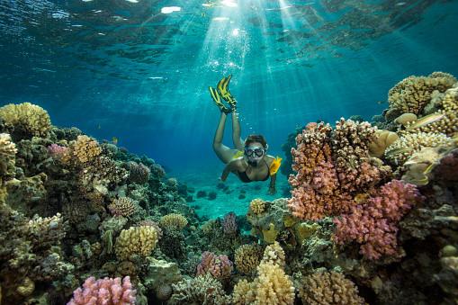 snorkeling coron palawan best island tou