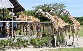 calauit safari busuanga tour travel.jpg