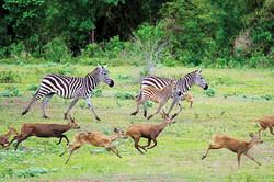 calauit safari 1