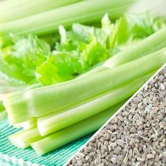 Organic Celery Pack (med bag)