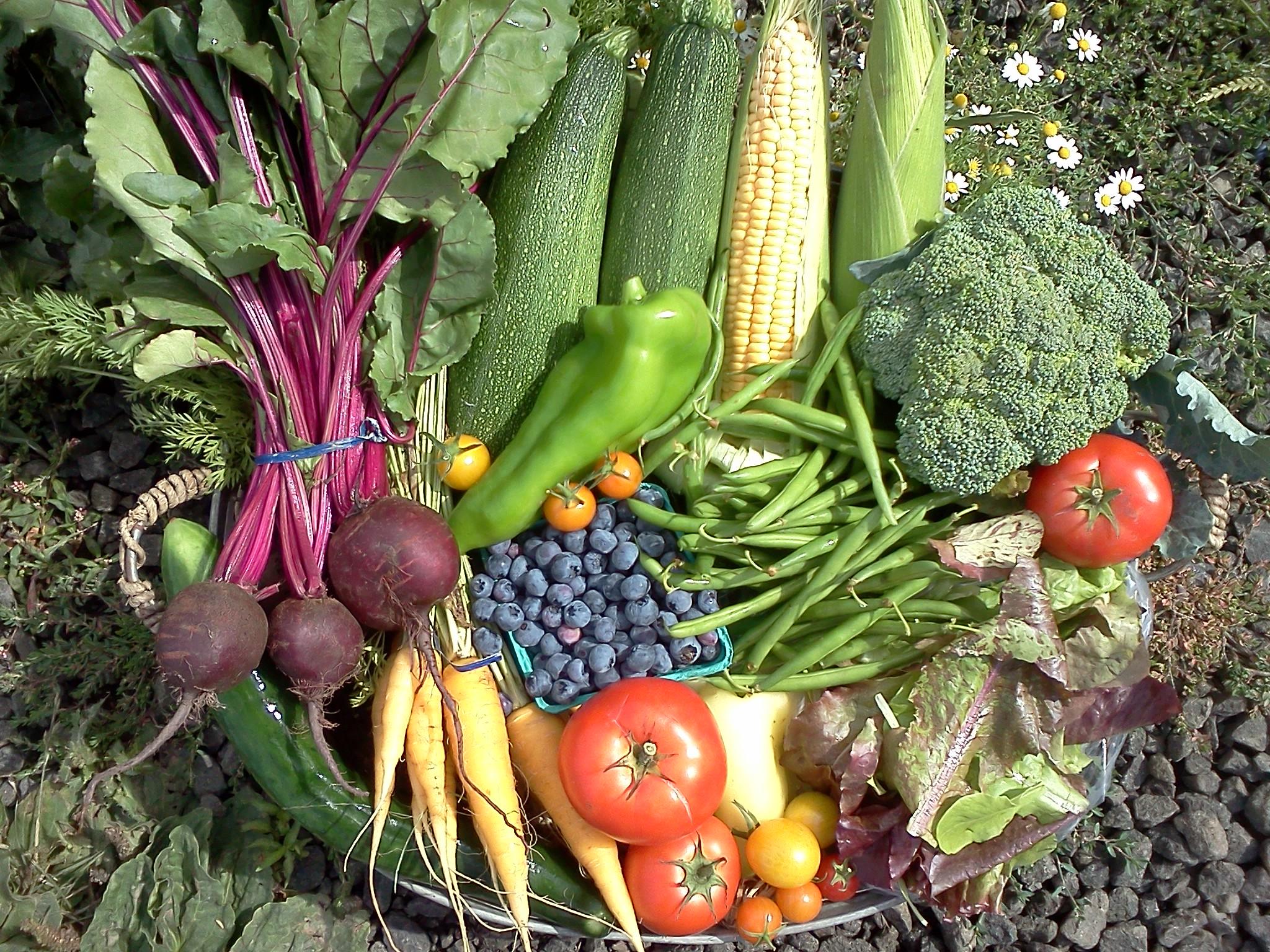 organic-CSA-farm-vegetables4