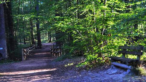 Connaissez vous la légende de la cité perdue de la forêt de Lespinasse ?