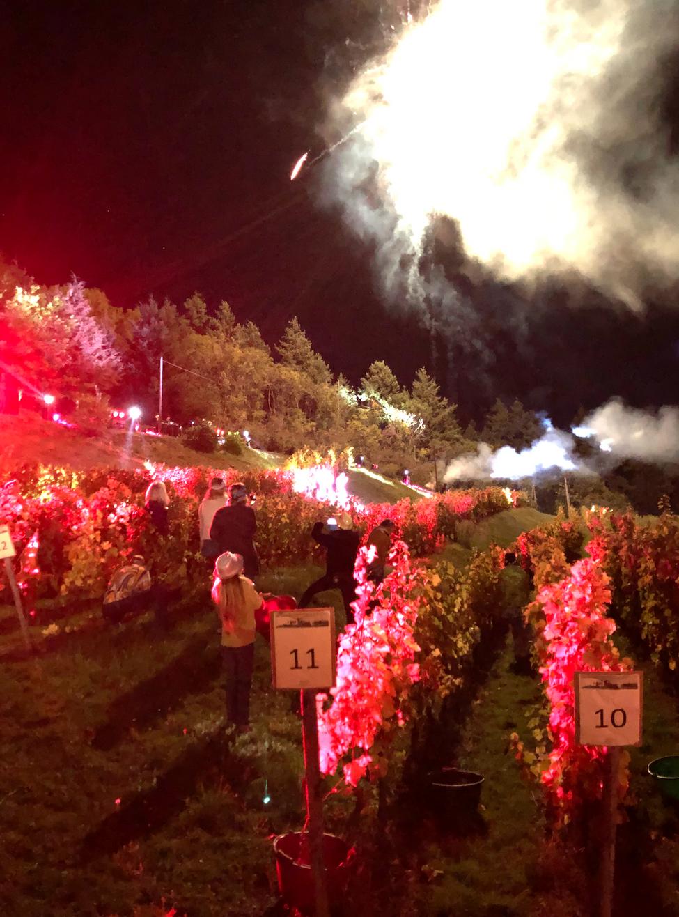 Vidéo à Saint-Alban : vendanges nocturnes en musique et sous un feu d'artifice !