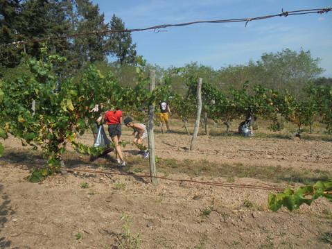 Quand les enfants de Saint Haon nettoyent nos vignes !