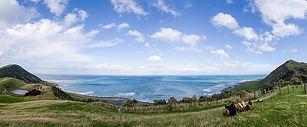 discover Wairarapa