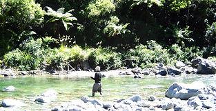 Wairarapa Wilderness Trout Fishing