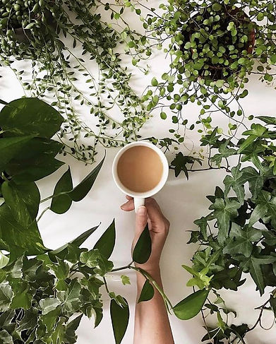 tea and plants.jpg