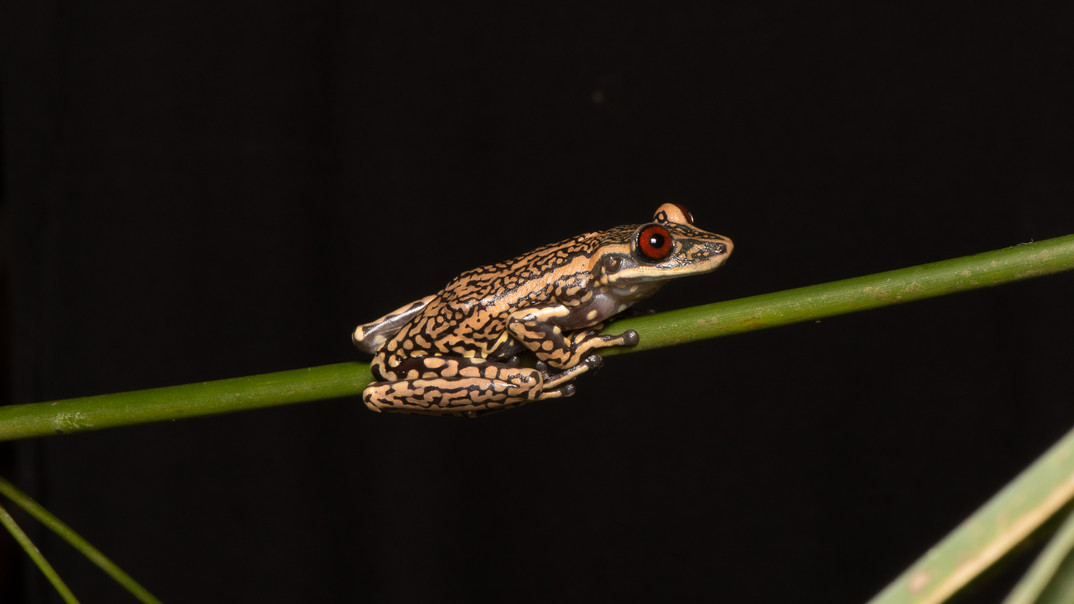 Beauty in a Frog
