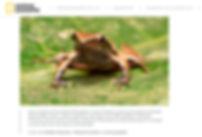 DOTS_NatGeo_Brasil_Site_Abr2019_3.jpg