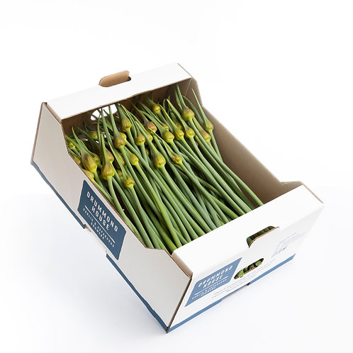 500g Drummond House Elephant Garlic Scapes