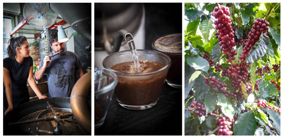 OWNERS OF PANTHER COFFEE EVALUATING COFFEE WHILE ROASTING(LEFT IMAGE). HOT WATER BEING POURED FROM KETTLE INTO GLASS CUP OF COFFEE GROUDS(MIDDLE IMAGE). COFFEE CHERRIES ON A COFFEE PLANT(RIGHT IMAGE).