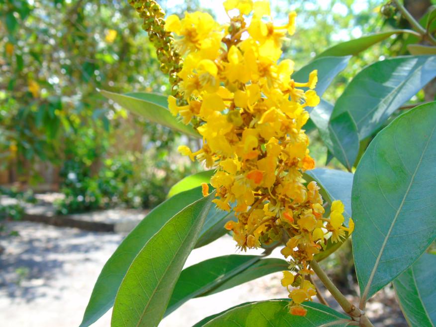 Flores da Restinga
