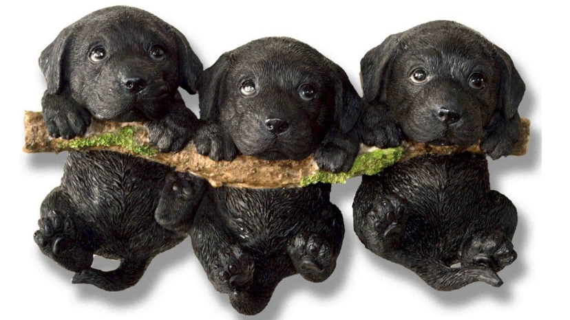 Black Puppies on a Branch