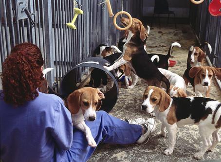 Myth Busting: Stop Vivisection