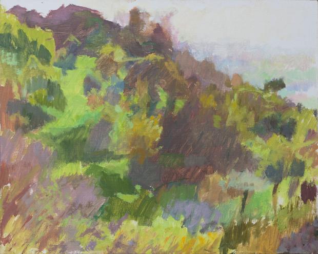 Cortona, Olive Grove in Sunlight