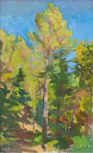 Pine Tree, Luberon
