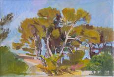 Pine Trees, La Ciotat, Late Afternoon