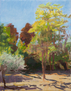 Olive and Acacia in Sunlight, Luberon