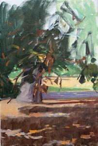 Horse Chestnut Tree, Kensington Gardens